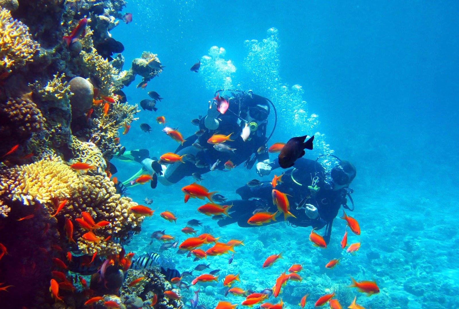 Beberapa Sisi Menarik Saat Menyelam di Chania